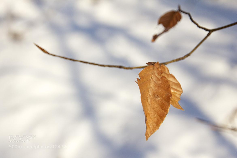 Photograph Sur une branche by Armandtchou L on 500px