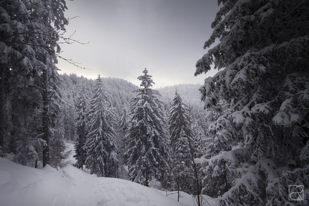 Photograph Between the trees by Romain Cassagne on 500px