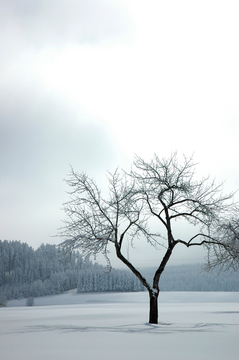 Photograph Winter by Philip Kozeny on 500px