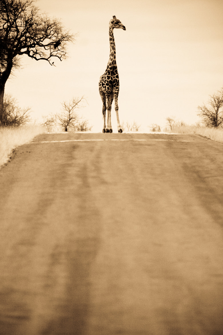 Photograph Road block in Africa  by Victor Borst on 500px