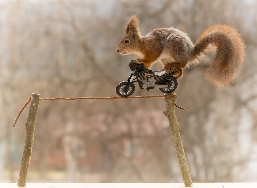 stunting squirrel, автор — Geert Weggen на 500px.com
