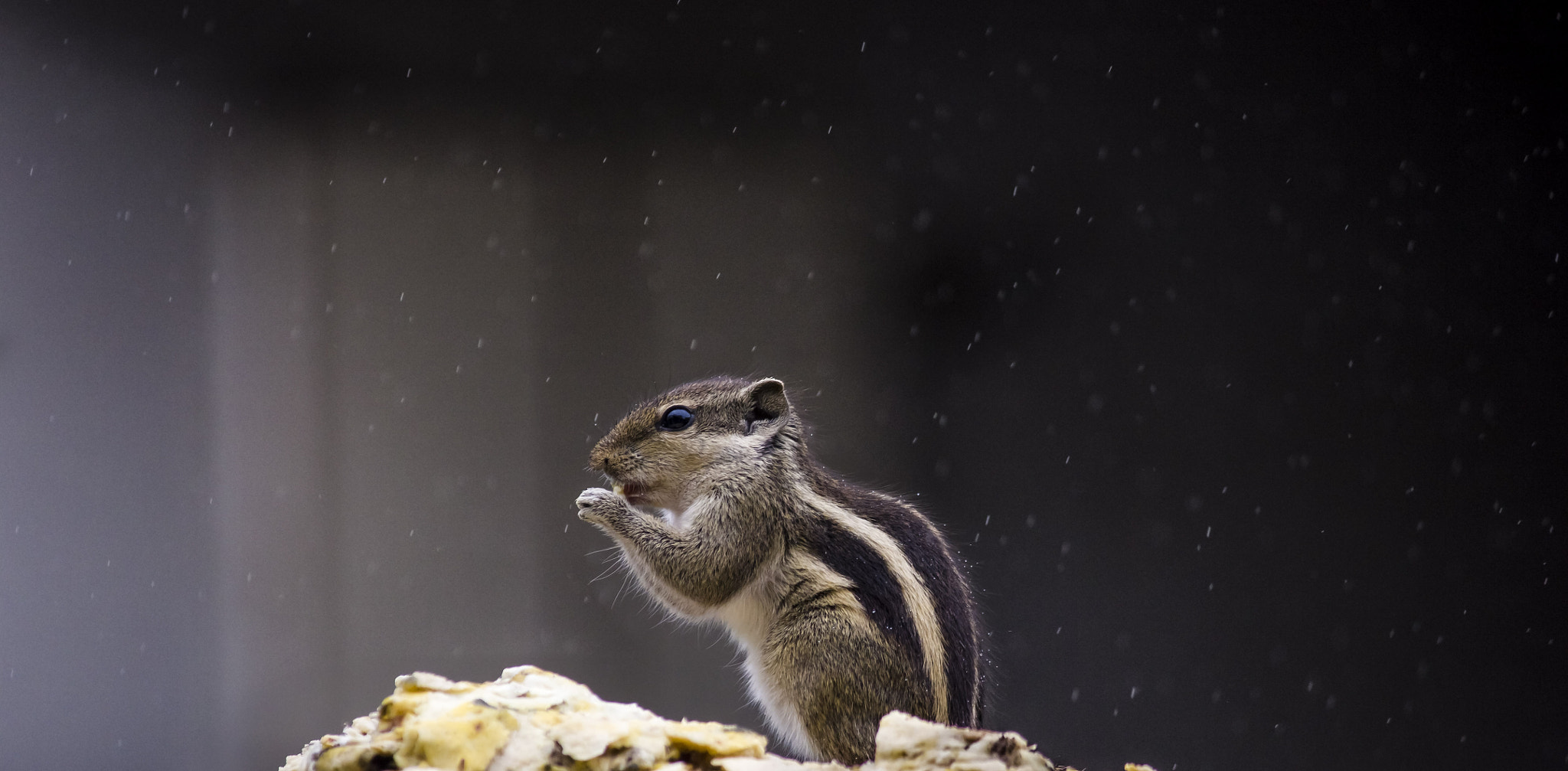 Photograph Squirrel in Rain by Akshay Khare on 500px