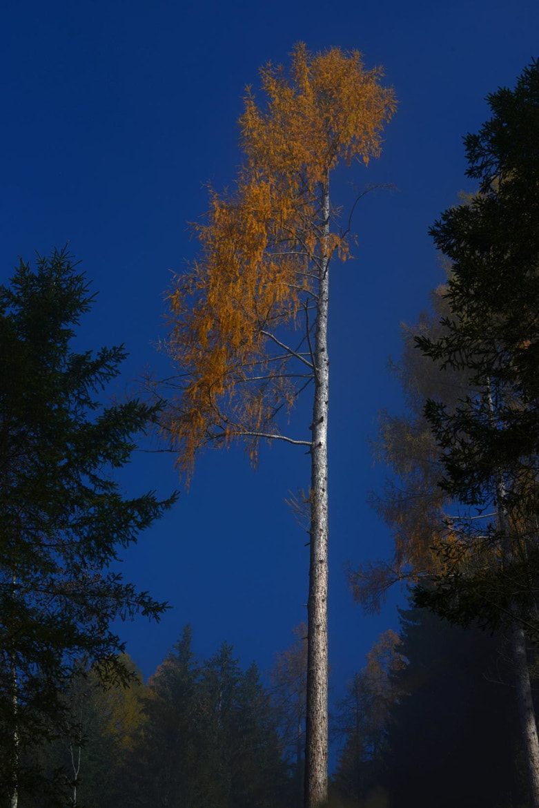 Photograph Yellow Blue Tree by Patrick Hochleitner on 500px
