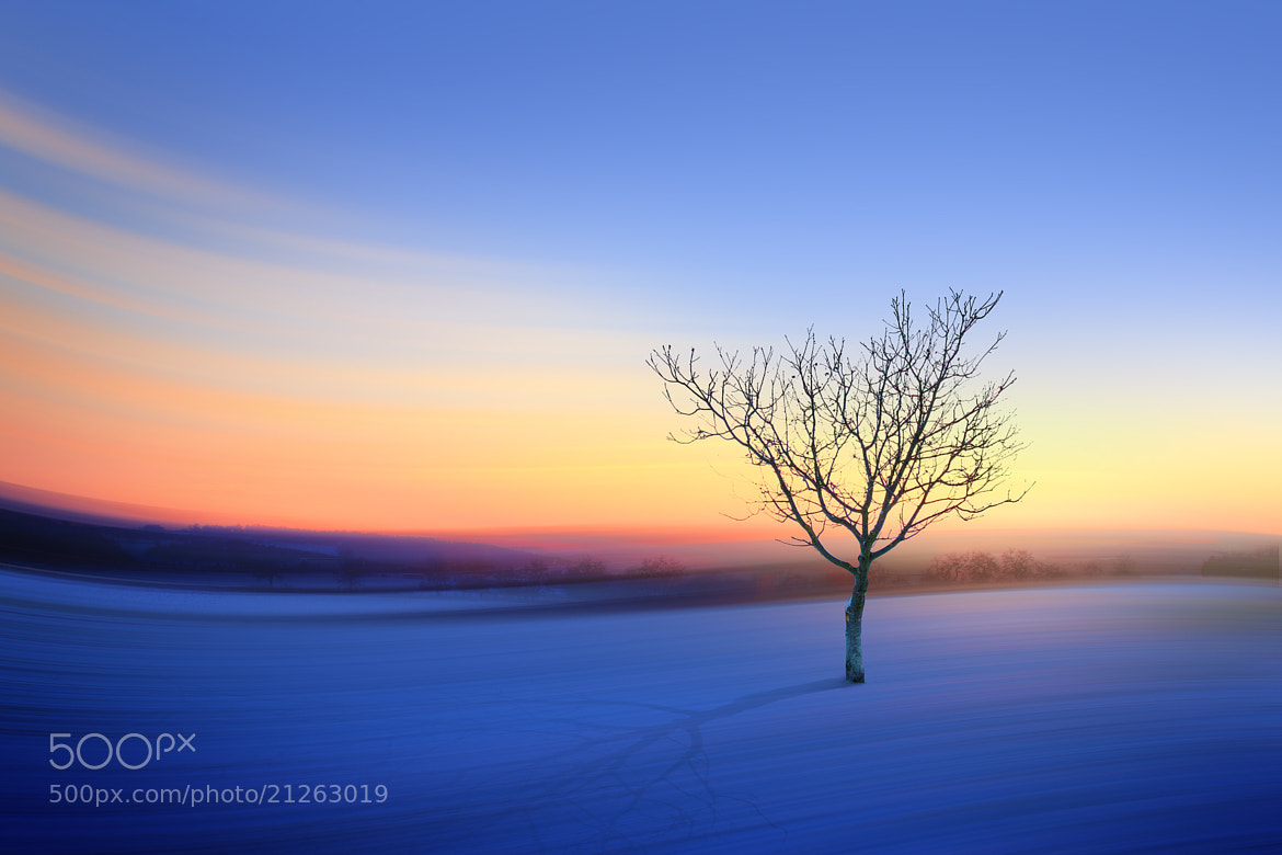 Photograph the lonely tree by Max Ziegler on 500px