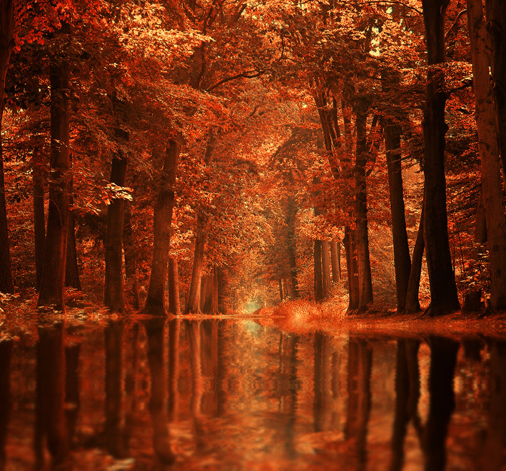 Photograph The Dream Forest by Sortvind  on 500px