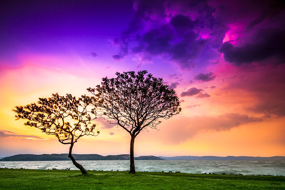 Photograph Lonely tree by F Levente on 500px