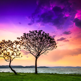 Lonely tree by F Levente (Levente)) on 500px.com