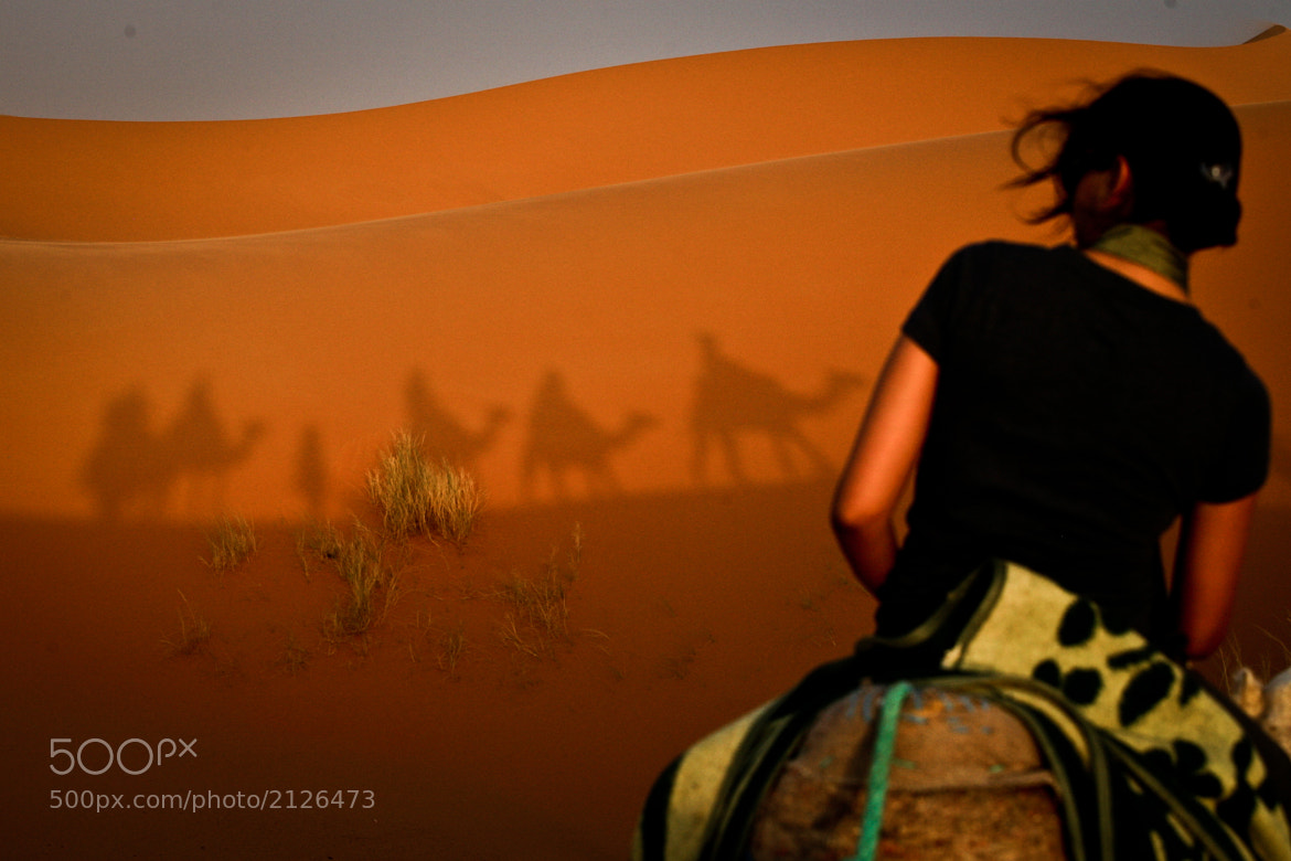 Photograph Camel Shadow Attack by Eyebeam Photography on 500px