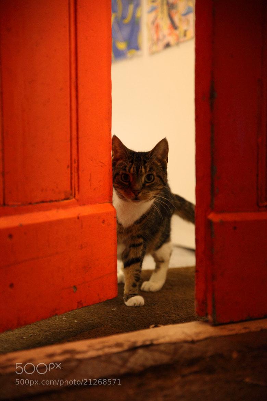 Photograph Brick Lane Kitty by Justin Sneddon on 500px