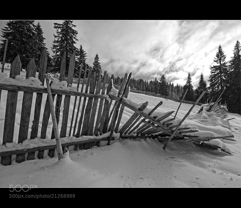 Photograph Fence by György Vrbovszki on 500px