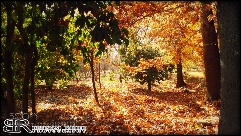 Photograph fall by Behnam Rouhi on 500px