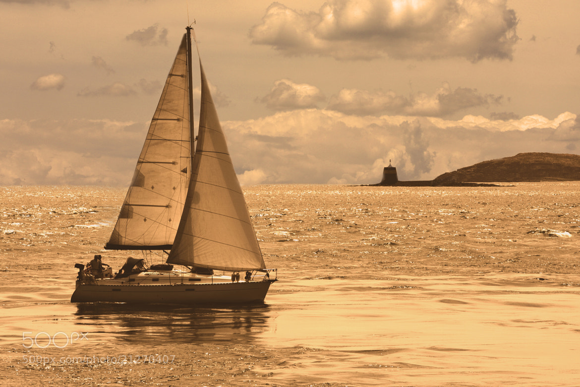 Photograph Sailing on a Sea of Gold by Mark Hendrickson on 500px
