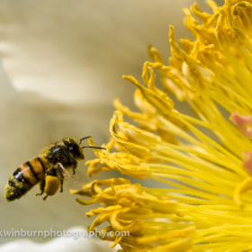 Loaded down with pollen by Mark Winburn (markwinburn)) on 500px.com