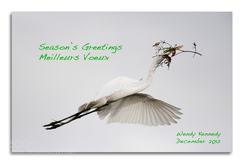 Photograph Season's Greetings/Meilleurs Voeux by Wendy Kennedy on 500px