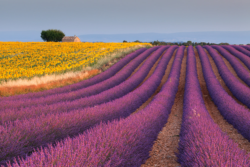 Photograph Couleurs et parfumes by Giordano Bertocchi on 500px