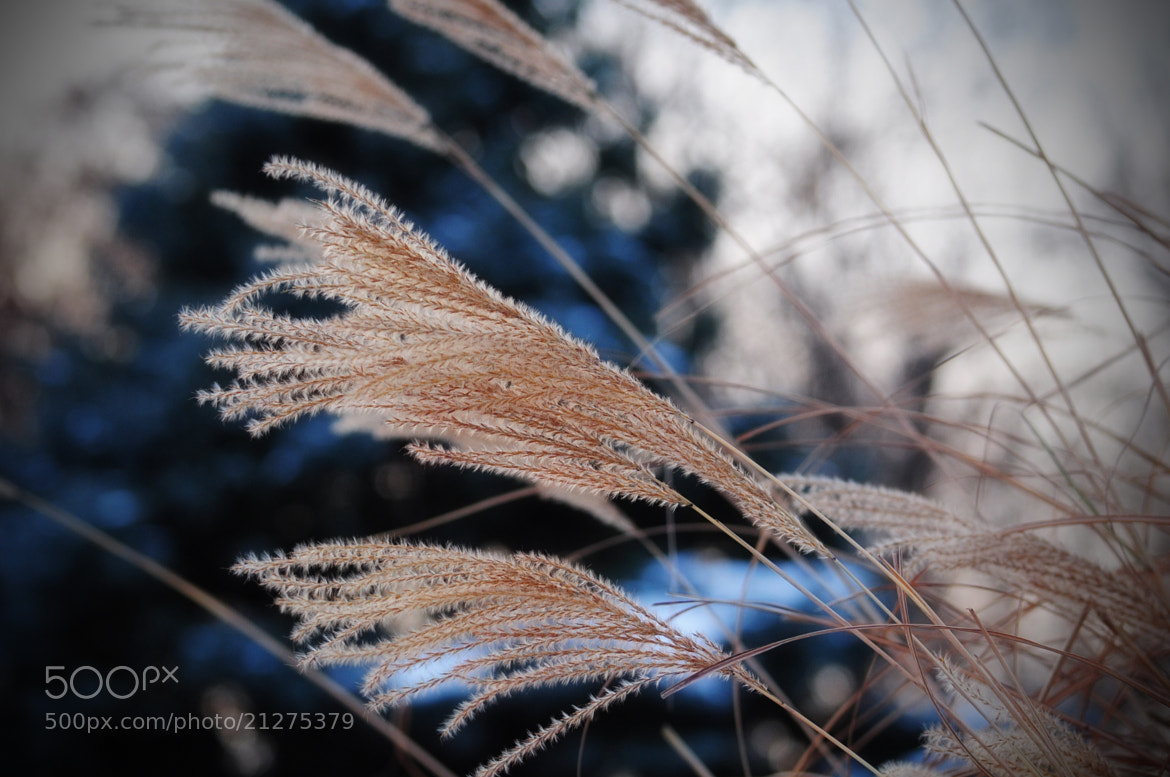 Photograph Grass by Olivia Dodon on 500px