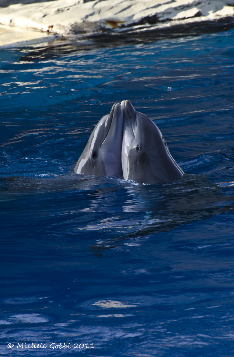 Photograph Dolphins Love by Michele Gobbi on 500px
