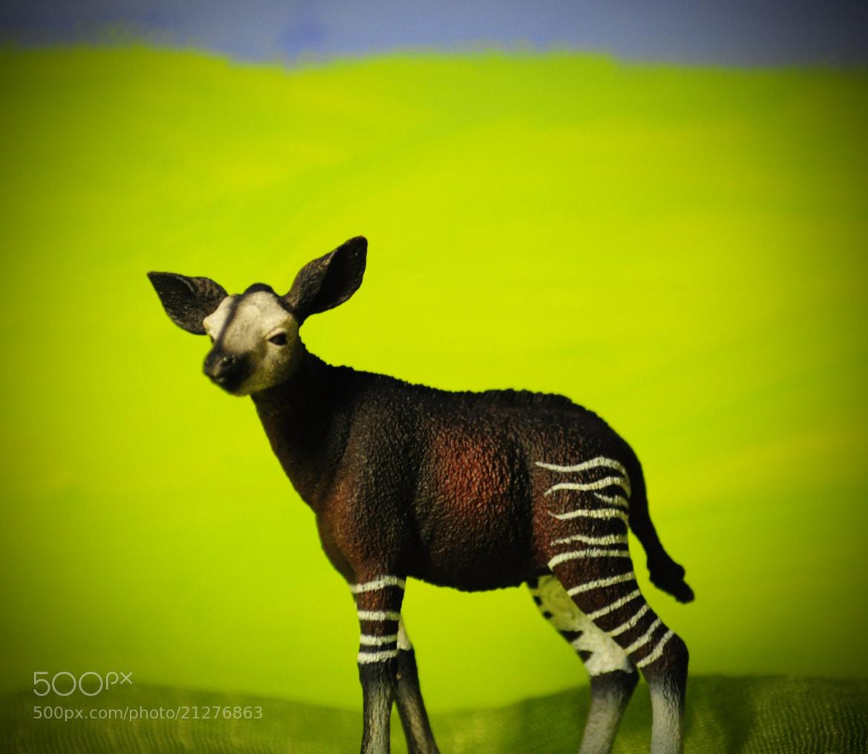 Photograph Baby Okapi by Olivia Dodon on 500px