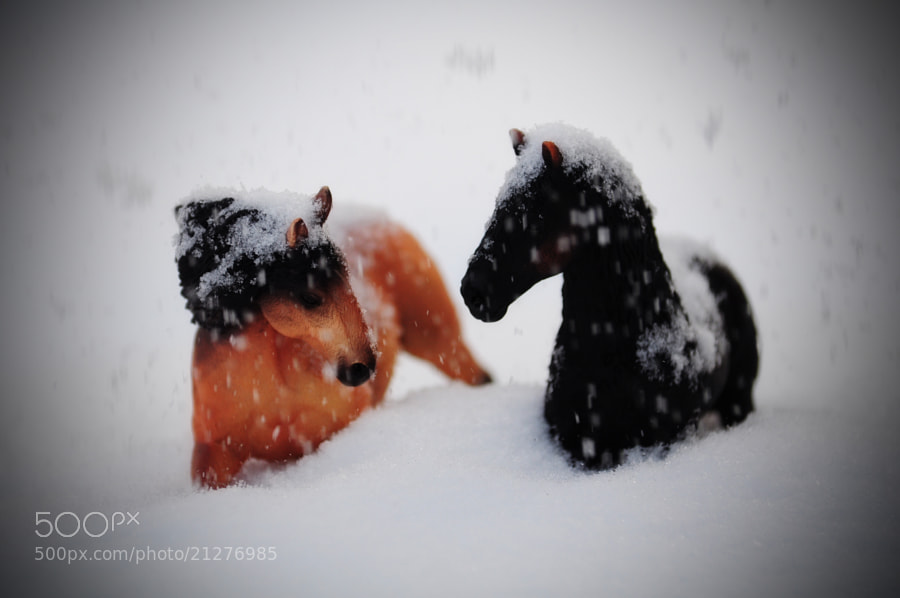 Photograph Horses in the snow by Olivia Dodon on 500px