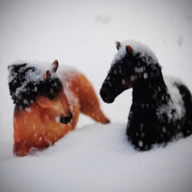 Horses in the snow by Olivia Dodon (olivia_dodon)) on 500px.com