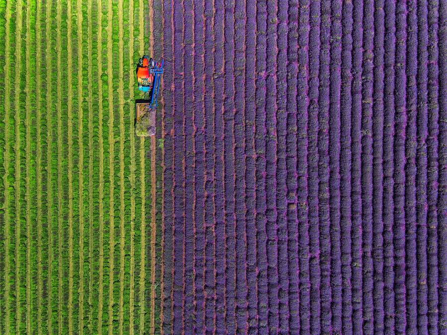 Aerial view of Tractor harvesting field of lavender by Valentin Valkov on 500px.com