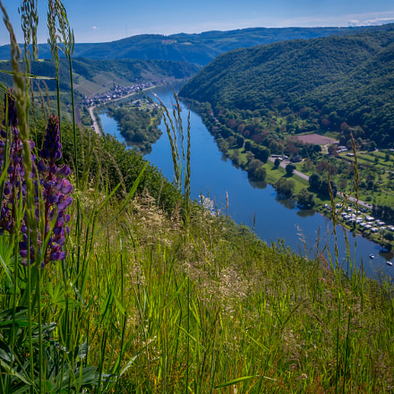 Mosel valley with Lupins.