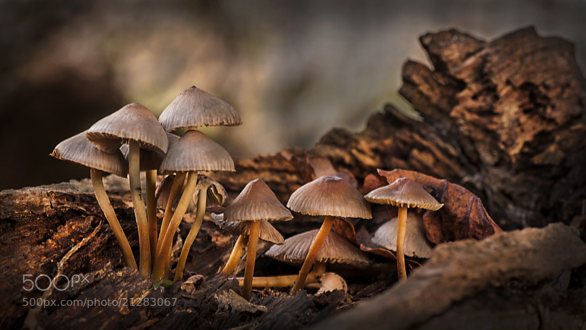 Photograph In the Light by Mark Shoesmith on 500px