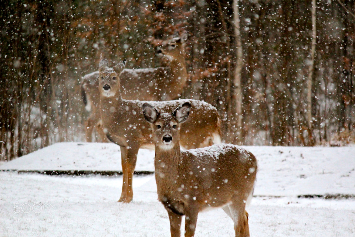 Photograph Hello Winter by Evan Williams on 500px