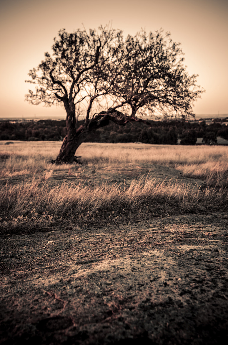 Photograph Brown Tree by Alan wright on 500px