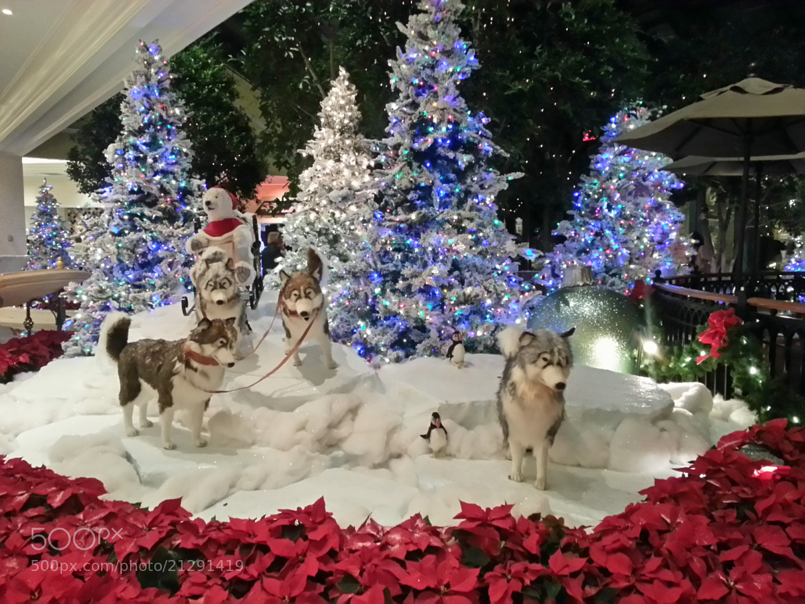 Photograph Christmas Decorations in Lobby of Beau Rivage Casino & Resort -  by Ruth Spicer on 500px