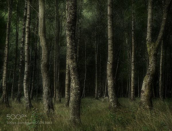 Photograph Untitled by stuart kerr on 500px