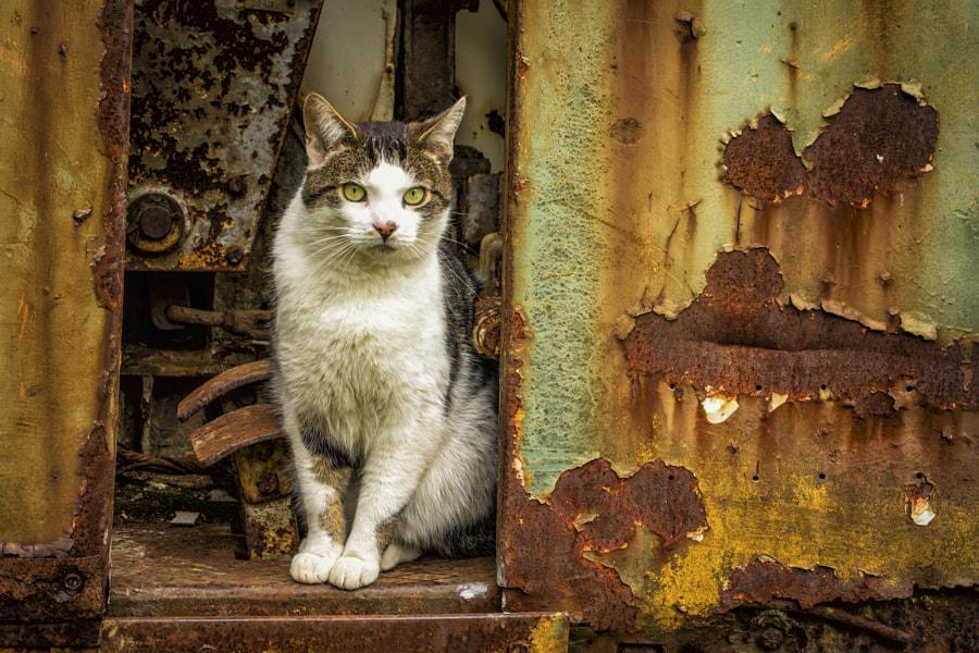 Cat in Rust Home