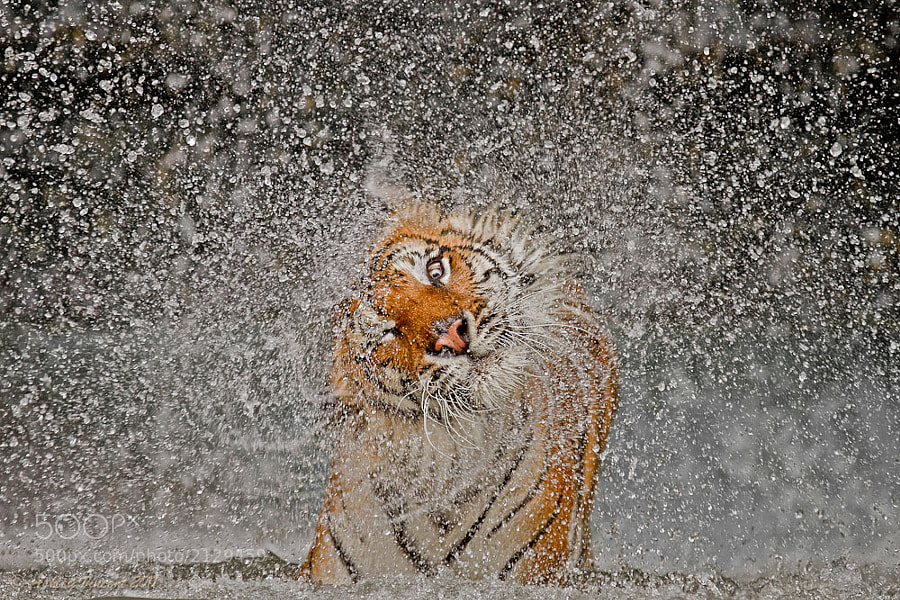 Photograph The Explosion! by Ashley Vincent on 500px