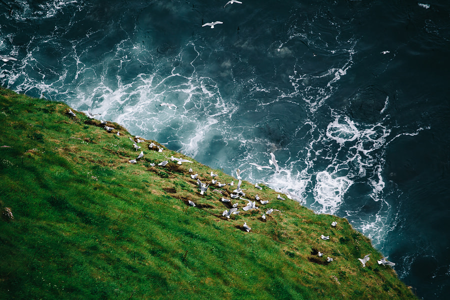 Seagulls At The Cliffs Of Moher