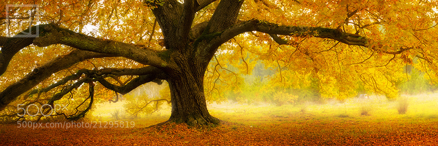 Photograph Autumn Palette by Dylan Fox on 500px