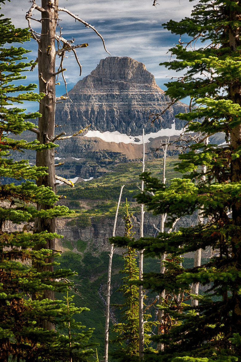 Photograph Peek through the Trees by Dave Gaylord on 500px