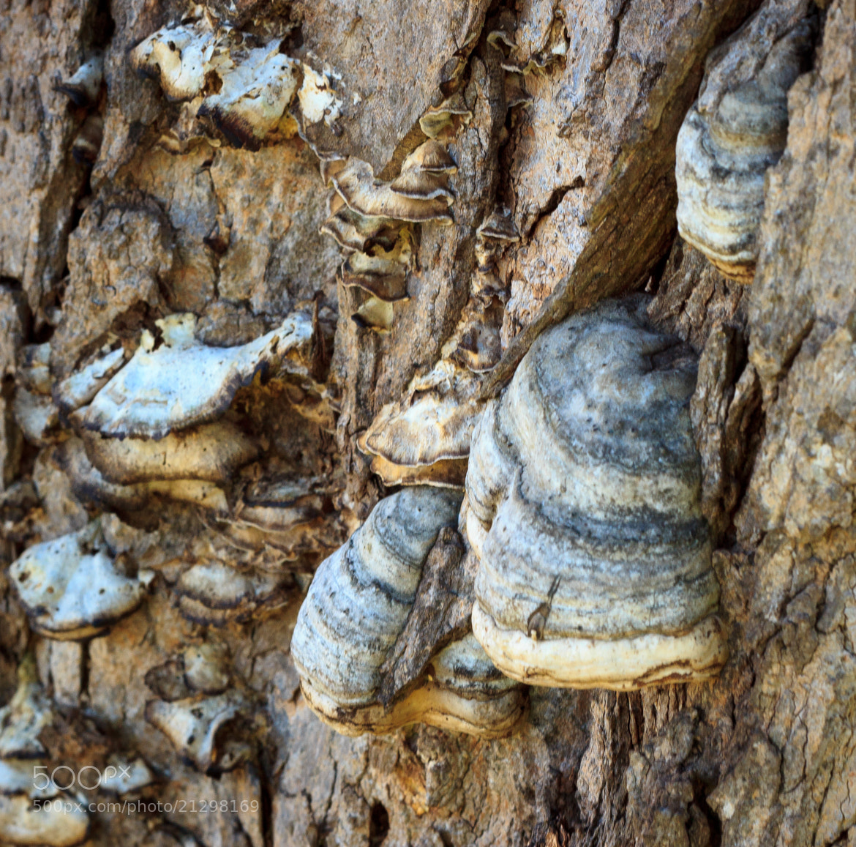 Photograph Fungus Amongus by John Gross on 500px