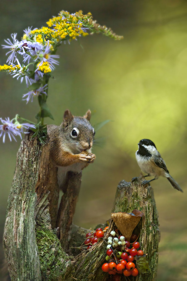 Flowers and fruits by nature photographer Andre Villeneuve on 500px.com