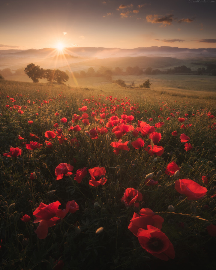 Spring Tuscany by Nature Photographer Daniel Kordan on 500px.com