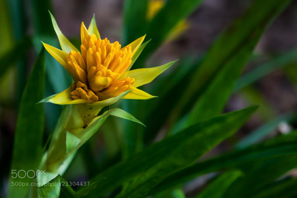 Photograph Yellow Flower  by George Bloise on 500px