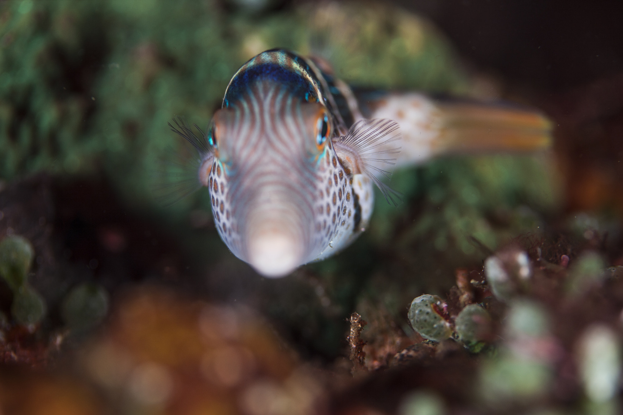 Photograph Filefish @ philippines PG by Sardon lee on 500px