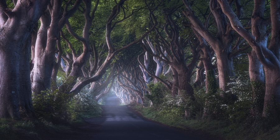 The Dark Hedges by Daniel F. on 500px