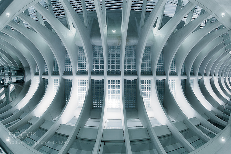 Photograph The Spine by LdS  on 500px