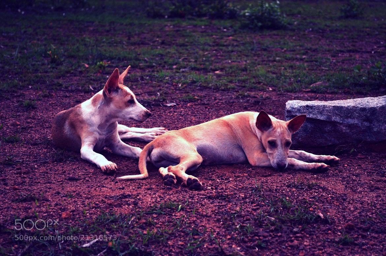 Photograph Dogs at rest! by Shravan K Acharya on 500px