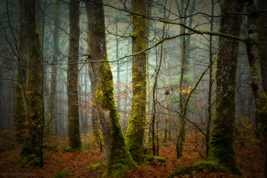 In the forest! by Patrice Thomas