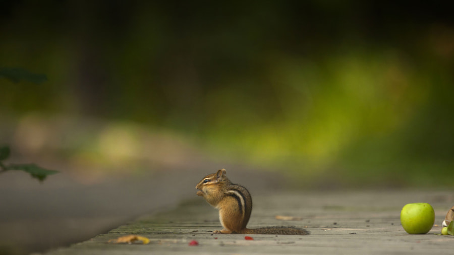 A moment in a life by Andre Villeneuve