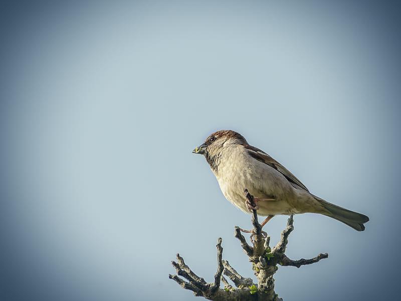 Lonely Beautiful Beautiful Bird Profile Natural Sk