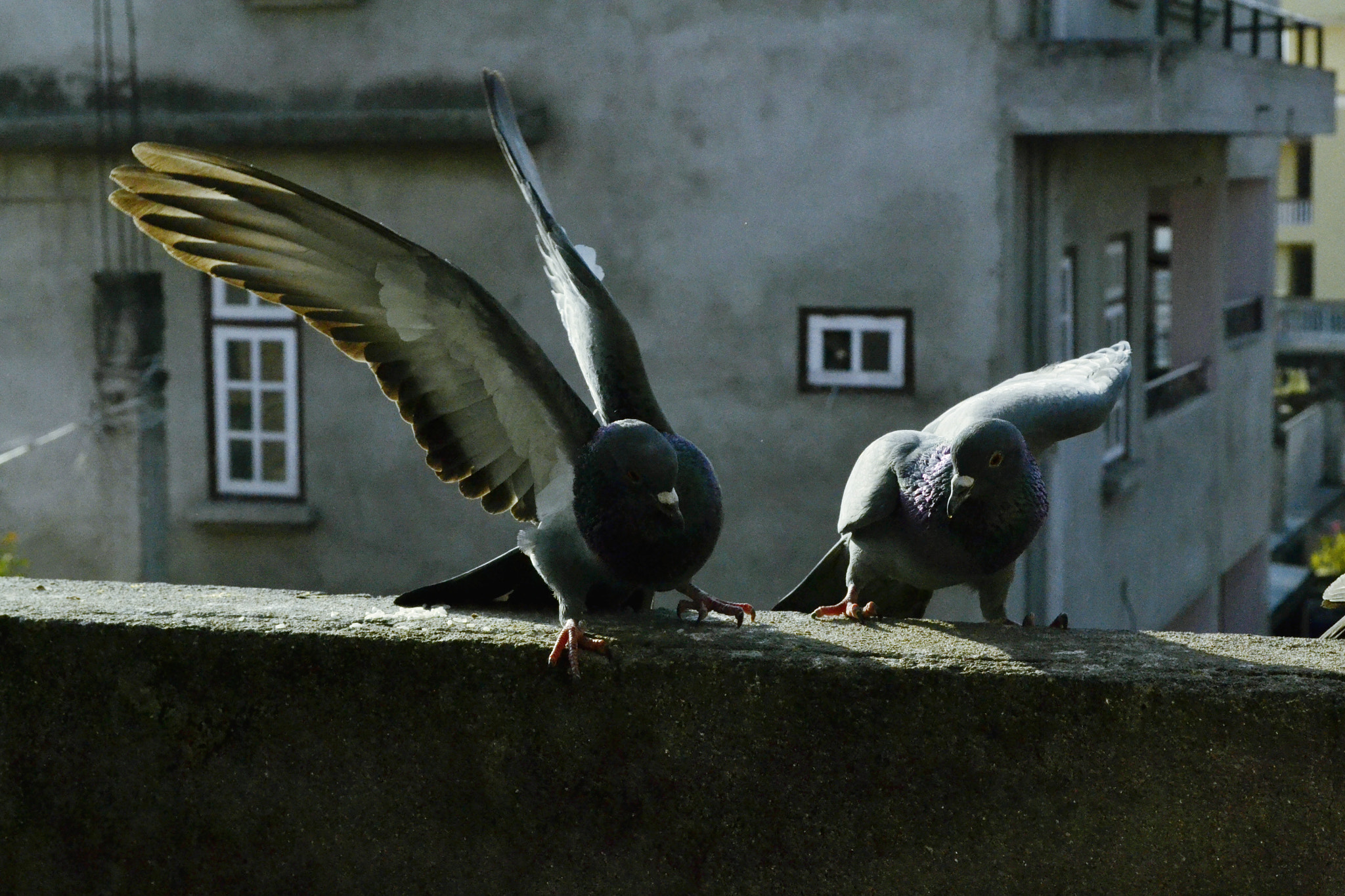 Photograph starting for some fight.. by Shakya Richa on 500px