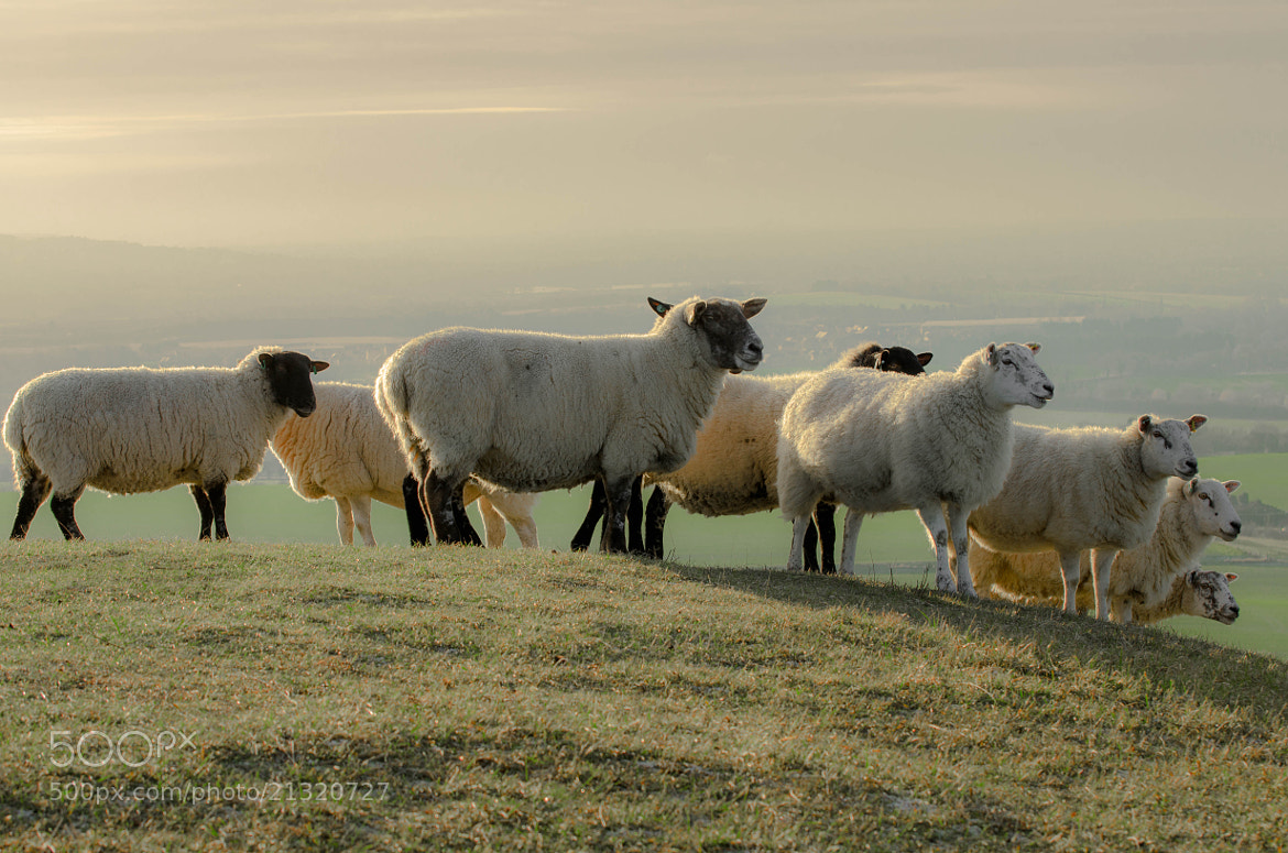 Photograph Sheep's Hill by Pawel Niktos on 500px