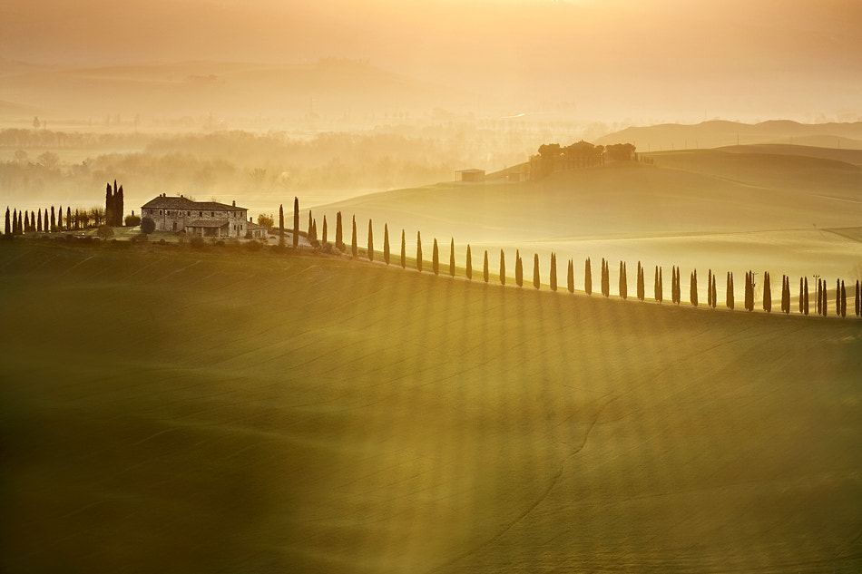 Photograph cypress avenue by Marcin Sobas on 500px